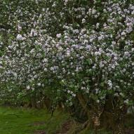 Blossom spring 2018